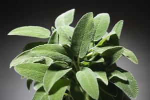 Sage herb in spanish