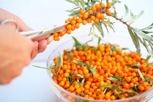 Sea Buckthorn Pulp CO2-to extract (O)