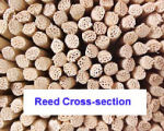 Reed Sticks