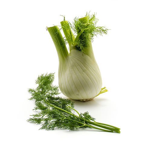Fennel, Sweet (O)